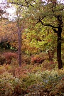 Autumn kopia1