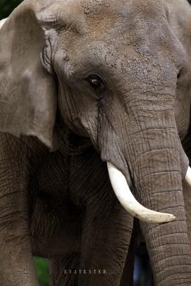 elefant sign 2