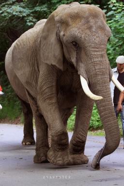 elefant sign