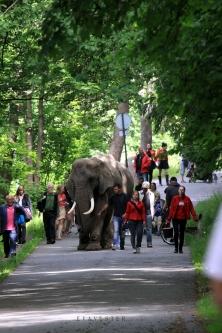 elefant slottskogen