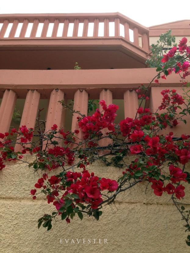 balkongflowers sign