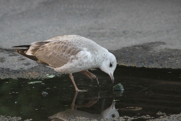 spegel spegel på marken där